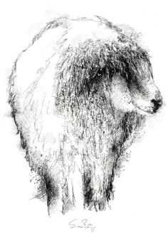 Crimped sheep, Artist Sean Briggs producing a sketch a day, prints available at https://www.etsy.com/uk/shop/SketchyLife  ##sketchaday#sketchmarchPrintson#Etsyhttp://etsy.me/1rARc0J ##wool #art #drawing #ewe #sheep