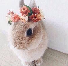 Easter bunny meets Coachella bunny. Happy #Easter everyone!