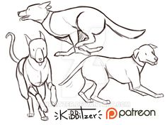 dog reference Dogs reference sheet by Kibbitzer on DeviantArt Cartoon Dog, Cartoon Drawings, Art Drawings, Drawings Of Dogs, Dog Anatomy, Anatomy Drawing, Drawing Reference Poses, Anatomy Reference, Animal Sketches