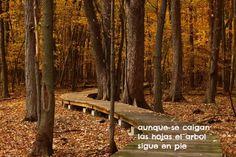 Free Image on Pixabay - Fall, Leaves, Trail, Foliage