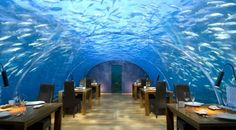 An Underwater Dining Experience In The Maldives Sea. Conrad Maldives Rangali Island Resort