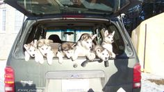 WARNING:  Explorer May Contain Huskies