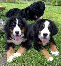 More pups