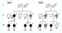 Although multiple sclerosis is known to run in certain families, attempts to find genes linked to the disease have been elusive. Now for the first time researchers are reporting a gene mutation that can be connected directly to the development of the disease.