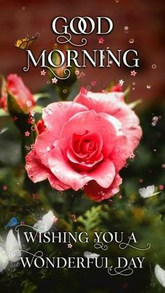 Good Morning Rose Gif, Good Morning Wishes Gif, Good Morning Beautiful Gif, Good Morning Beautiful Flowers, Good Morning Images Flowers, Good Morning Image Quotes, Good Night Love Images, Good Morning Happy, Good Morning Picture