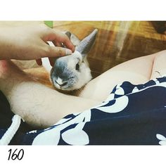 16.0309 DAY160 陪啊目做設計 其實已經是兩周前了 Two weeks ago.  #nuomi #instaanimal #bunnylove #bunny #usagi#ウサギ#instabunny #rabbits #instarabbit #dailyflufffeature #侏儒兔 #兔  #rabbit #iganimal_snaps #iganimal#instacute#pets #happy_pet #taiwan #nuomi160 #160 #星期三 #wednesday by nuomi_1002