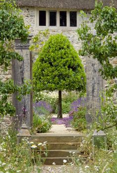 Garden Ideas to Steal from Germany Walled garden Devon Arne Maynard ; Gardenista trimmed yew in corner in front of window Walled garden Devon Arne Maynard ; Gardenista trimmed yew in corner in front of window Formal Garden Design, Home Garden Design, Home And Garden, Formal Gardens, Outdoor Gardens, Outdoor Rooms, Outdoor Living, Walled Garden, Garden Cottage