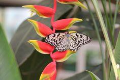 Garten der Schmetterlinge Schloss Sayn
