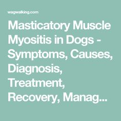 Masticatory Muscle Myositis in Dogs - Symptoms, Causes, Diagnosis, Treatment, Recovery, Management, Cost