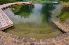 Avert, Manage, And Eliminate Black Mildew Natural Swimming Pool - Nice Steps Swimming Pool Pond, Natural Swimming Ponds, Natural Pond, Swimming Pool Designs, Jacuzzi, Aquascaping, Garden Pool, Backyard Pools, Pool Decks