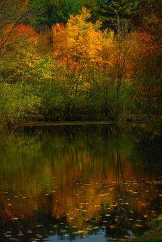 ✯ Fall Solitude | #reflections | #reflection