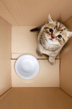 Zo cute katje!!!