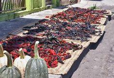 "Chiles drying on ""petate"".   (Chiles secando encima del petate)"