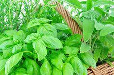 Kräuter auf der Fensterbank - So wird s gemacht Parsley, Herbs, Vegetables, Flowers, Plants, Diy, Window Sill, Shade Perennials, Florals
