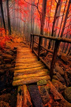Forest Bridge. ?Image credit MatthewW http://allphotographyblog.com/2013/10/20/photo-of-the-day-forest-bridge-in-autumn/