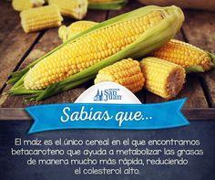 #Sabíasque el maíz es legendario y  es el ícono de la temporada de cosecha. Healthy Life, Healthy Living, Food Swap, Life Care, Better Life, Home Remedies, Health Tips, Dental, Beauty Hacks