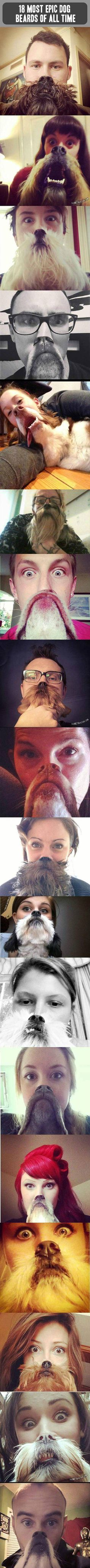 Here are some funny dog pictures snapped at the perfect time.