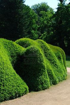 an blob-like topiary take over. love it.