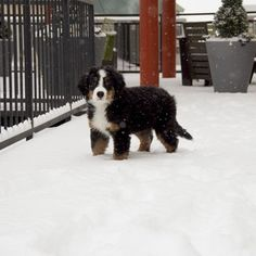 """""""Hey, like, quick question for you: have you seen my paws?!""""   17 Dogs Who Just Experienced Their First Snow"""