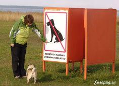 dogs-pugs
