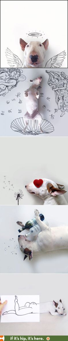 A Bull Terrier is a muse for his illustrator /owner at http://www.ifitshipitshere.com/masters-muse-bull-terrier-illustrator-make-beautiful-art-together/
