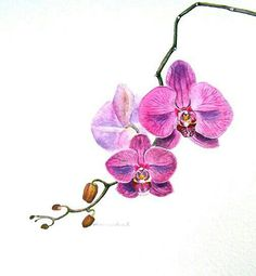 Orchid Tattoos, Designs And Ideas : Page 27 Orchid Flower Tattoos, Flower Tattoo Designs, Rose Tattoos, Tatoos, Tattoo Flowers, Orchid Flowers, Watercolor Orchid Tattoo, Watercolor Flowers, Orchid Drawing