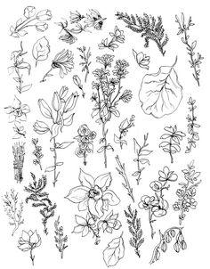 Momalish line art how to draw hands, art и tattoo drawings Botanical Drawings, Botanical Art, Botanical Illustration, Drawing Hands, Line Drawing, Doodle Drawings, Tattoo Drawings, Floral Drawing, Flower Doodles