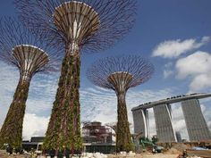 """These """"Supertrees"""", towering in front of tall skyscrapers, are vertical gardens, embedded with environmentally sustainable functions and range from 25-50-meters in height, with emphasis placed on the vertical display of tropical flowering climbers, ferns and epiphytes. The imposing trees have colossal concrete trunks weighing hundreds of tonnes. While thousands of thick wire rods have been used to create artificial branches and canopies."""