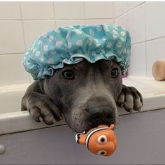 Animals And Pets, Baby Animals, Funny Animals, Funny Pets, Wild Animals, Super Cute Puppies, Cute Dogs, Staffy Dog, Fotos Do Instagram