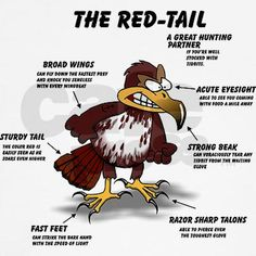 The red-tail a great hunting parter