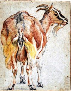 chalk pastel animal drawings - Google Search