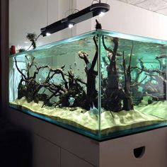 A great deal of men and women love aquascapes since they give us a way to experience a completely different world. Every aquascape needs to have a focus. The real key to any excellent aquascape is to begin at the bottom. Biotope Aquarium, Discus Aquarium, Nature Aquarium, Aquarium Fish Tank, Fish Tanks, Saltwater Tank, Saltwater Aquarium, Freshwater Aquarium, Aquarium Terrarium