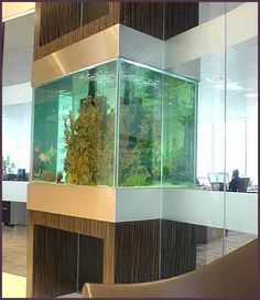 Aquarium Group - Bespoke glass office aquarium  #fishtank #aquarium #bespoke…