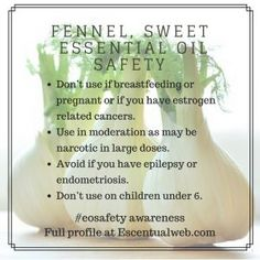 Sweet Fennel Essential Oil Profile including safety tips Essential Oil Safety, Are Essential Oils Safe, Fennel Essential Oil, Foeniculum Vulgare, Pregnant And Breastfeeding, Endometriosis, Safety Tips, Aromatherapy, Cancer