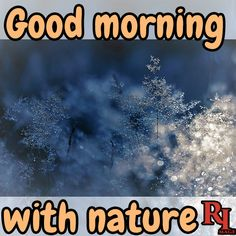 Good morning with nature Good Morning Nature Images, Hd Images, Feel Good, Pictures, Beautiful, Beauty, Photos, Background Images Hd, Beauty Illustration