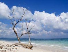 """Saatchi Art Artist Subhrajyoti Parida; Photography, """"The blue skies and the blue sea with dried branch of a tree..."""" #art"""