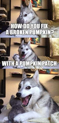 14 Best Jokes From Pun Husky - Jokes - Funny memes - - Why Did Mozart Killed His Chicken? The post 14 Best Jokes From Pun Husky appeared first on Gag Dad. Husky Jokes, Dog Jokes, Puns Jokes, Corny Jokes, Animal Jokes, Funny Puns, Memes Humor, Funny Animals, Dog Humor