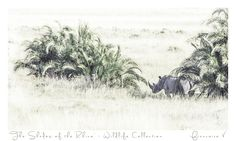 """The Shadow of The Rhino"" {Wildlife Collection} by Francoise V Photography Gallery, Fine Art Photography, Beautiful Creatures, Art Gallery, Wildlife, Portrait, Artwork, Nature, Collection"