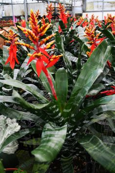 green plants, greenhouse, bromeliad