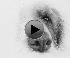How#to#draw#a#dog