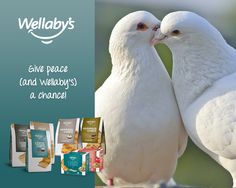 Give peace (and Wellaby's) a chance!