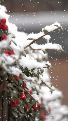 New Ideas Garden Winter Snow Red Berries Noel Christmas, Country Christmas, All Things Christmas, Winter Christmas, Winter Holidays, Christmas Berries, Green Christmas, Christmas Colors, I Love Snow