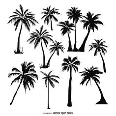 Set of palm trees silhouettes in black over white. Collection includes many…