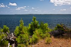 national forests in texas Best Places To Vacation, Places To Visit, Pine Forest, Texas Travel, National Forest, Family Travel, Just In Case, Landscape Photography, National Parks
