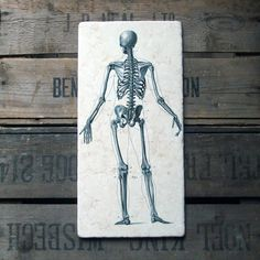 19th century steel engravings of the anatomy of human bones reproduced on solid limestone £49