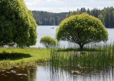 terijoen salava - Google Search Best Cities, The Fresh, Finland, Scenery, River, City, Places, Garden, Nature