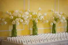 Classic white tulips all in a row