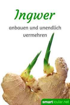 garden care vegetable Ingwer ist gesund un -