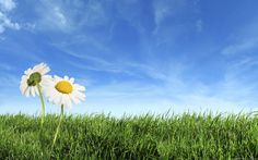Two Flowers at Field Nature Backgrounds powerpoint backgrounds