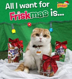 Coupon alert! You can score savings on your favorite #Friskies treats at Puri.na/waffles_friskmas and download a custom Waffles gift tag while you're there! #ad #Friskmas #kitten #kitty #kittens #pet #pets #animal